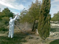 Control químico procesionaria del pino