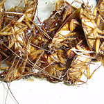 remedios caseros contra cucarachas