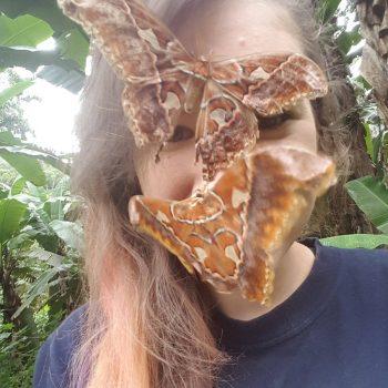 insectos en la cara