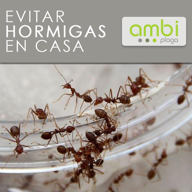 Hormigas en casa. Evítalas con este truco - Ambiplaga BlogAmbiplaga