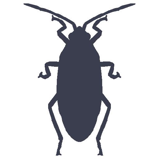 Eliminación de cucarachas, hormigas, arañas