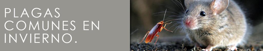 plagas-comunes-en-invierno