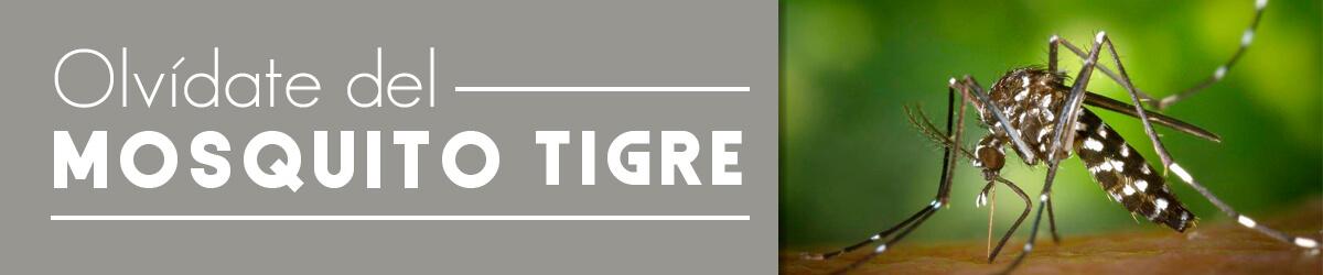 mosquito tigre en málaga