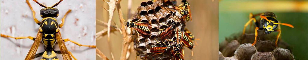 control de plagas de avispas en malaga