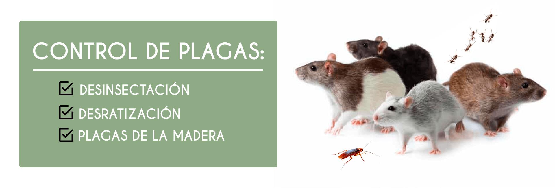 control de plagas malaga