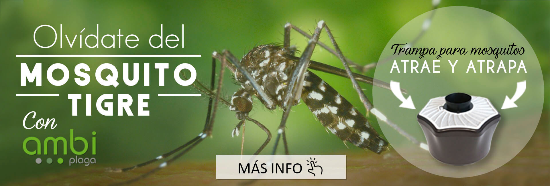 plaga de mosquito tigre en malaga