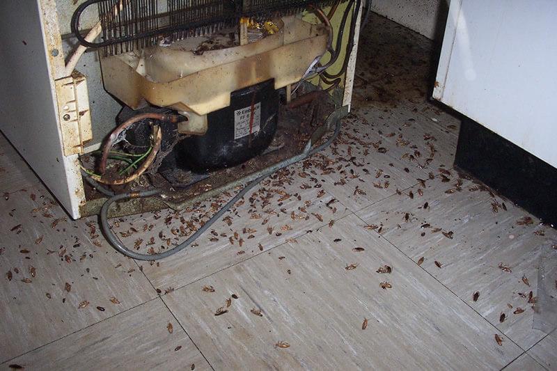 fumigador de cucarachas